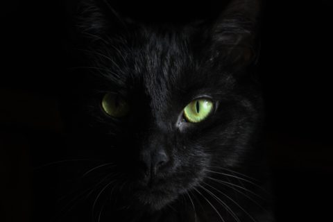 Why superstitions work.